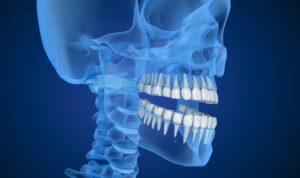teeth and skull illustration